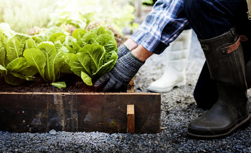 Manutenzione e potatura ordinaria piante - Guidoriccio Service